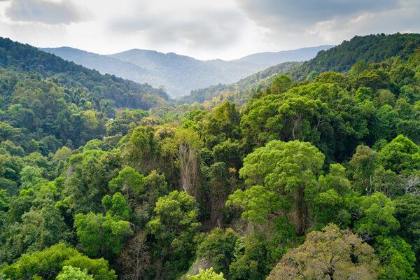 Wald aus Laubbäumen mit Bergen im Hintergund